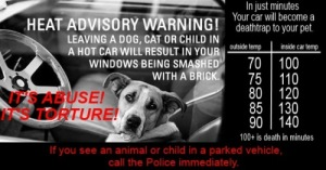pets in cars WARNING
